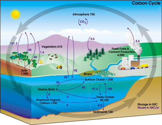 Carbon Cycle Diagram : New Energy and Fuel