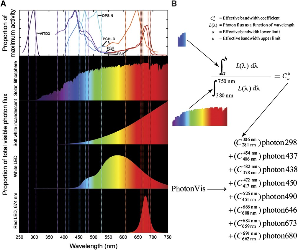 Light spectrum effects on algae new energy and fuel analysis of light spectra a activity and irradiance spectra the top graph displays activity spectra for photon utilizing reactions included in irc1080 pooptronica