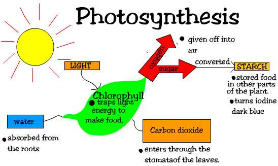 Whats the word equation photosynthesis?