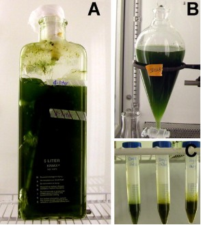 Cyanobacteria Lab Samples. Click image for more info.