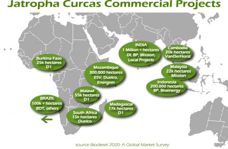 Jatropha Commercial Efforts Map. Click image for the largest view.