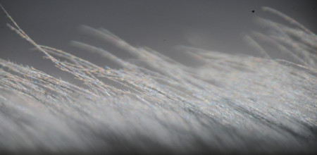 Close-up view of a flight feather of a Great Grey Owl. Image Credit: J. Jaworski.  Click image for the largest view.