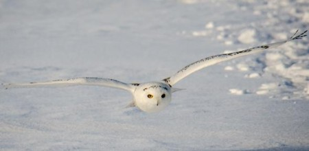 Owl, by Mirko Zammarchi via Creative Commons. Click image for the largest view.