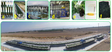 Algae to Biofuel Productions Steps. Click image for the largest view.