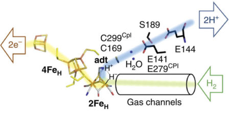 A Step Closer To Enzymes Producing Hydrogen
