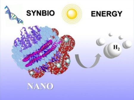 Sunlight Powered Membranes With Protein Make Hydrogen