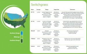 Ceres Switchgrass Seed Chart.  Click image for more info.