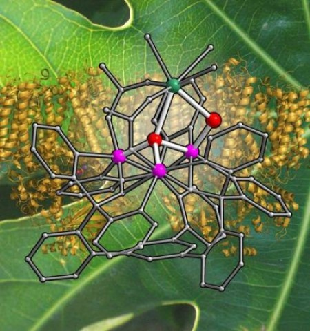 Metal Catalyst Cluster for Photosynthesis Displayed over a Background of Photosystem II.  Click on the image for a larger view.