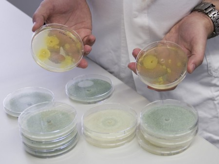 Fungi Samples Used to Genetically Engineer Enzyme Production. Click image for the largest view.  Image credit: Vienna University of Technology