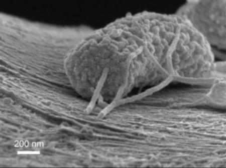 Exoelectrogenic Microbe Bio Generators. Click image for more info.