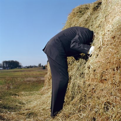 Needle In A Haystack Search. Click image for the largest view.