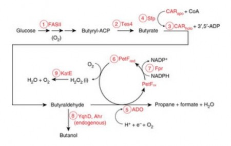 Bio Propane Production Process Schematic.  Click image for more info.