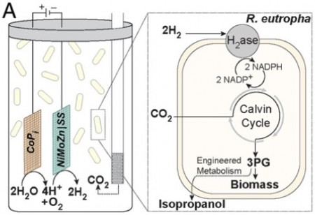 Schematic diagram of bioelectrochemical cell.  Click here to go to the PNAS paper for full details.