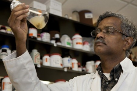 Bala Rathinasabapathi, a UF/IFAS professor of horticultural sciences, works in his lab in Gainesville. He and his colleagues may have found a key to converting algae to fuel. Image Credit: UF/IFAS. Click image for the largest view.