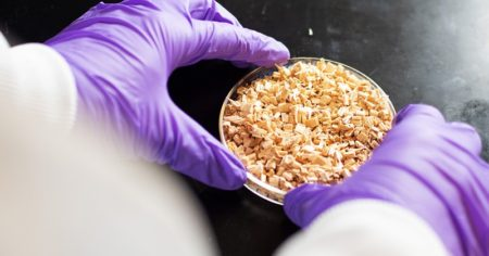 Process Developing For Lubricants From Biomass